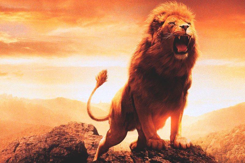 Cómo domesticar al León: Las claves para llevarse con Leo
